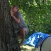Udfodret til at klatre i træ